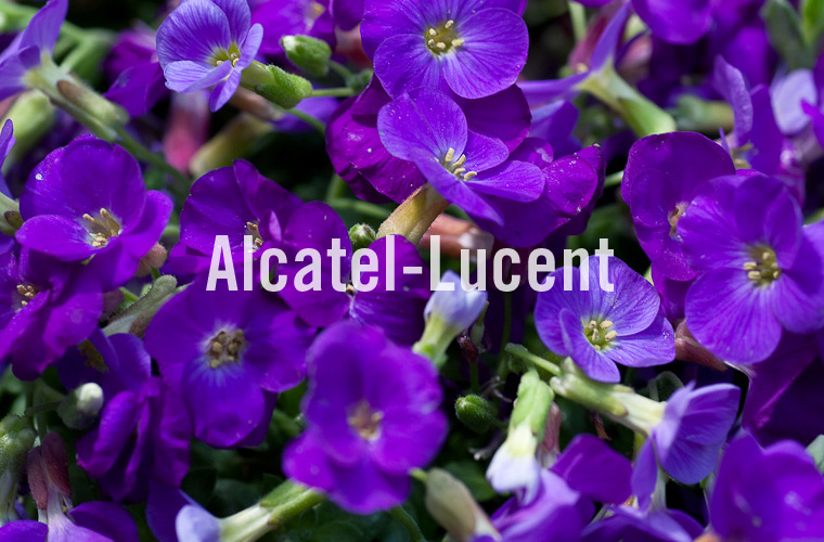 003 Alcatel-Lucent